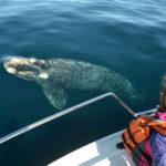 Avistaje de ballenas, una experiencia única y responsable