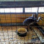 El Ministerio de Agricultura, Ganadería, Industria y Comercio advierte sobre compra de especies autóctonas