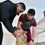 Continúan las campañas gratuitas para mascotas