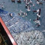 """""""Mediante la pesca solidaria se asistirá a los sectores más vulnerables"""""""
